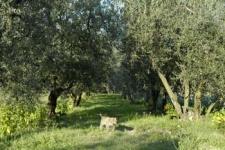olivlunden